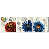 Пышноцветы (PH340120052)