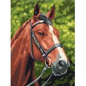 Лошадь №1 (PC3040009)