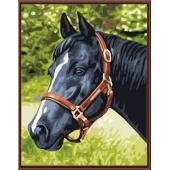Лошадь №4 (PC3040012)