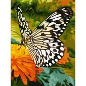 Черно-белая бабочка (PC3040015)