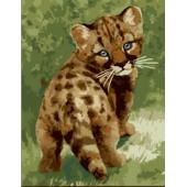 Котенок леопарда (PC3040022)