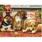 Три щенка (PC4050074)