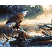 Орел охотник (PC4050076)