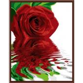 Красная роза (PP4050039)